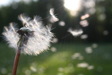 Improve Your Wishing