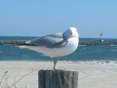 Seagull Stories